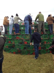 Start of the Lobster Trap Tree